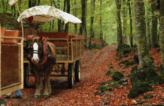 Shortbreak in Olot and visit La Fageda d'en Jordà